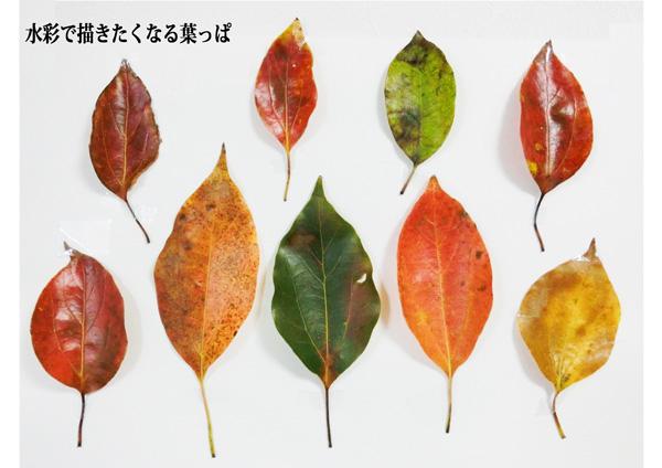 水彩で描きたくなる葉っぱ
