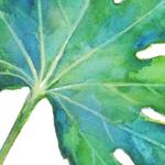 大人のぬり絵-水彩での彩色画-2つの葉っぱ