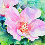 大人のぬり絵:水彩で描く芙蓉の花