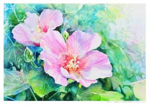 1)芙蓉の花