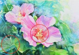 花の水彩画(塗り絵)の描き方n1-16