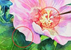 花の水彩画(塗り絵)の描き方n1-18