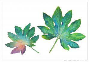 大人のぬり絵 水彩画(二つの葉っぱを描く)