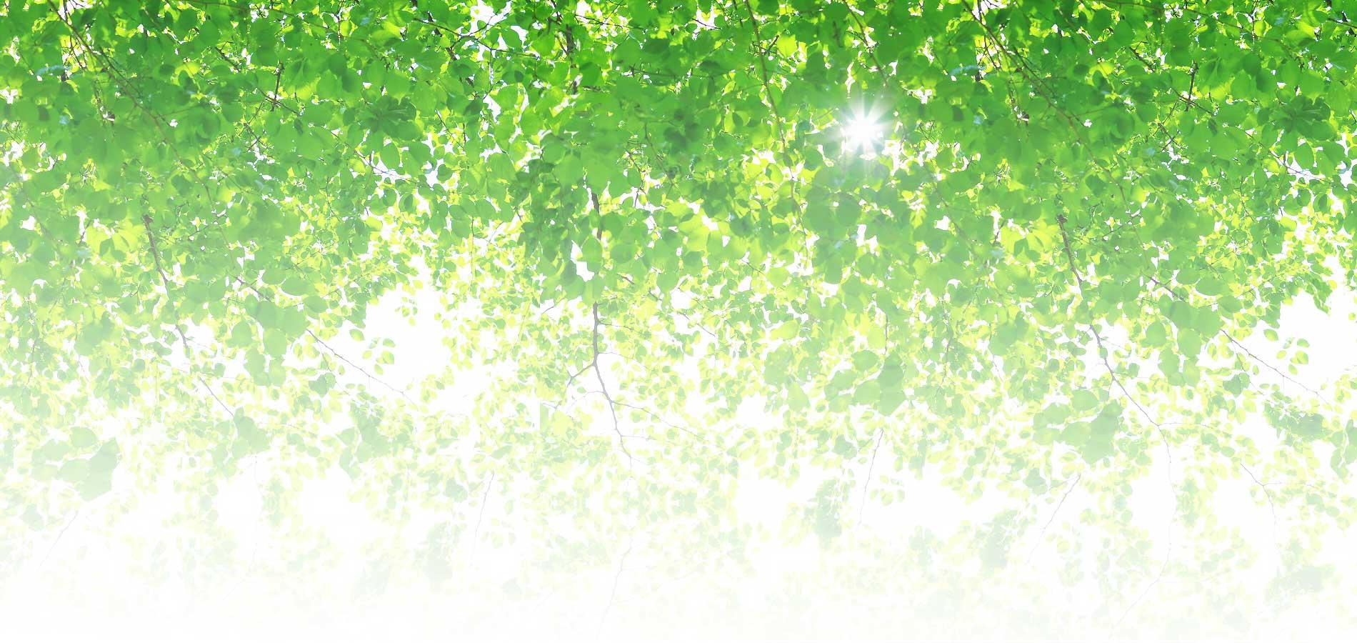 水彩時間-大人のぬり絵-背景-こもれび