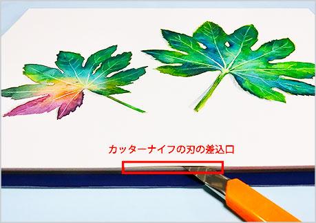 水彩画,ヤツデの葉,水彩紙を剥がし取る