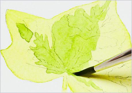 水彩画、植物の葉っぱの描き方-ウェットオンドライの手順2