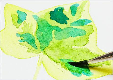 水彩画、植物の葉っぱの描き方-ウェットオンドライの手順3