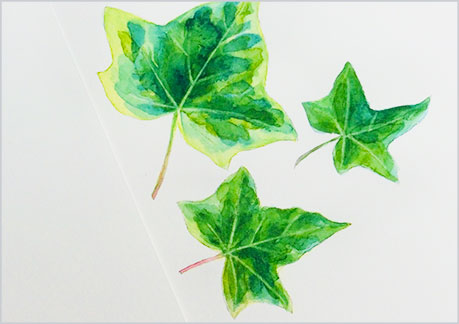 水彩画-植物の葉っぱの描き方-ウェットオンドライで完成9