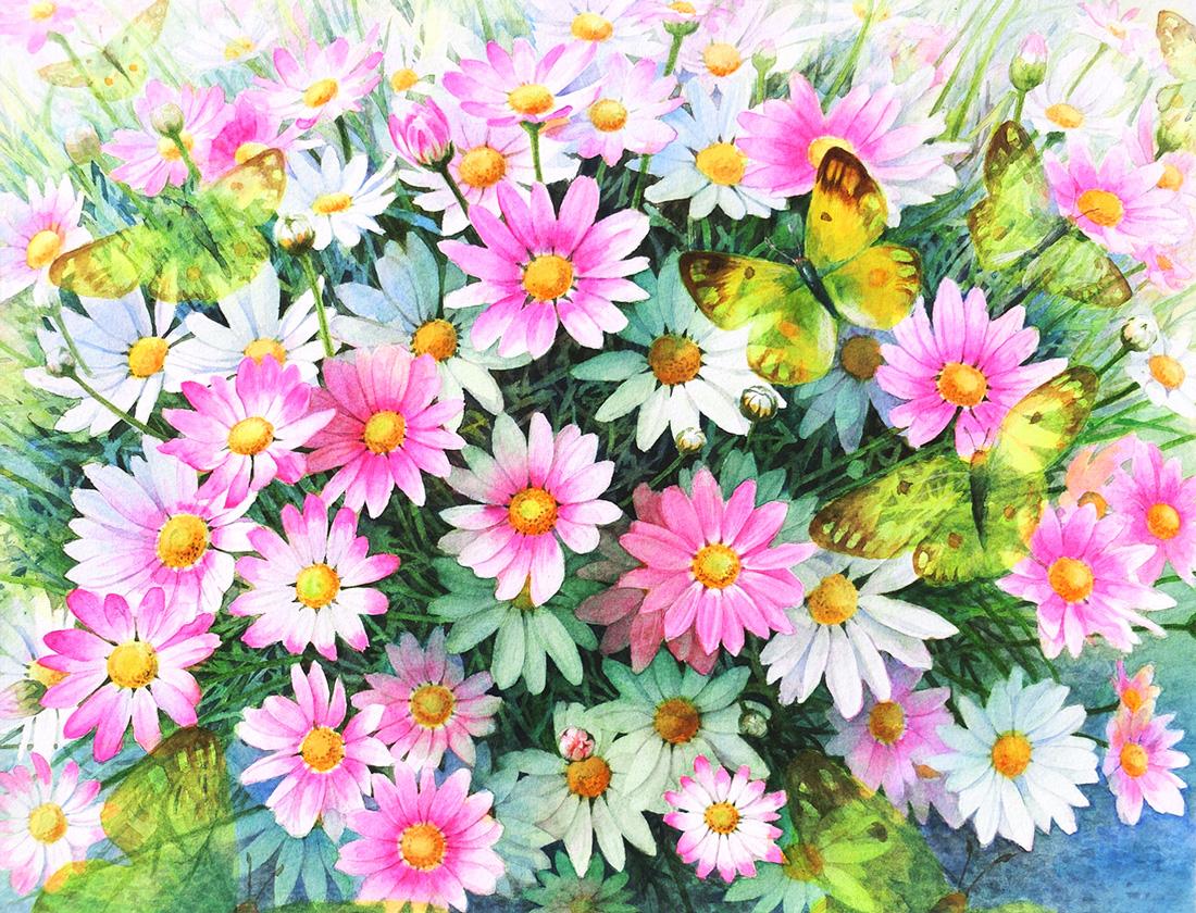 水彩画_花のマーガレットと蝶の絵(水彩イラスト・絵・Watercolor painting)