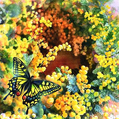 ミモザの花の水彩画