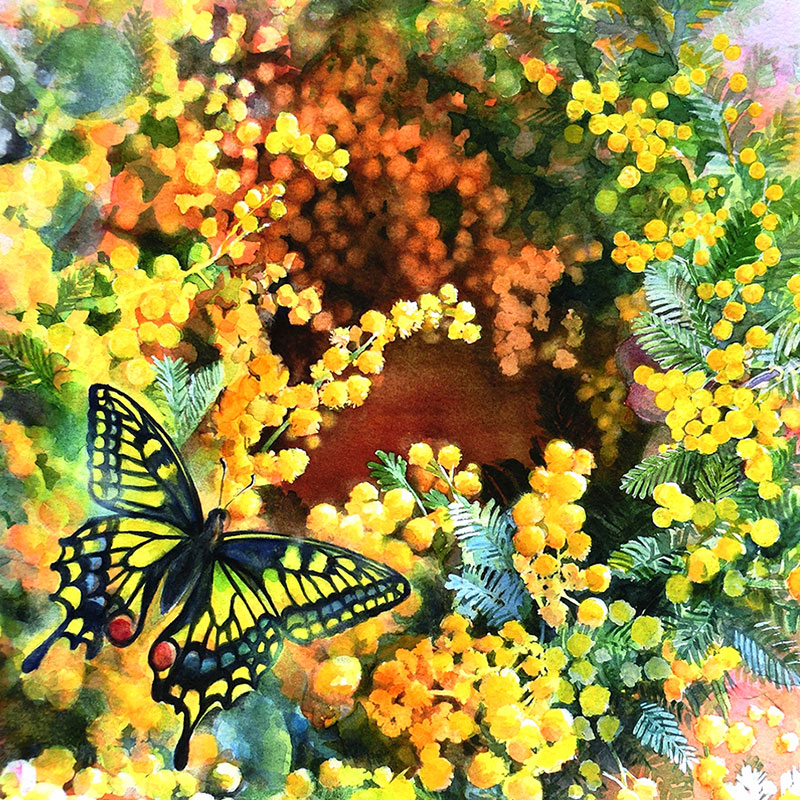 水彩画-ミモザのリースと蝶
